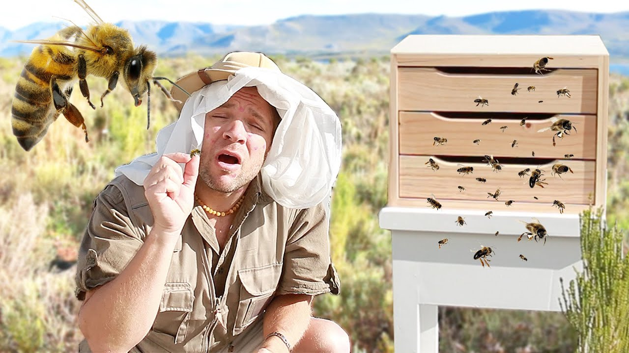 Bee stung on butt youtube