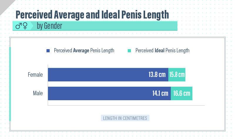 Average size penis pics