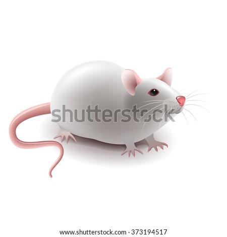 Rat free hairy tubes